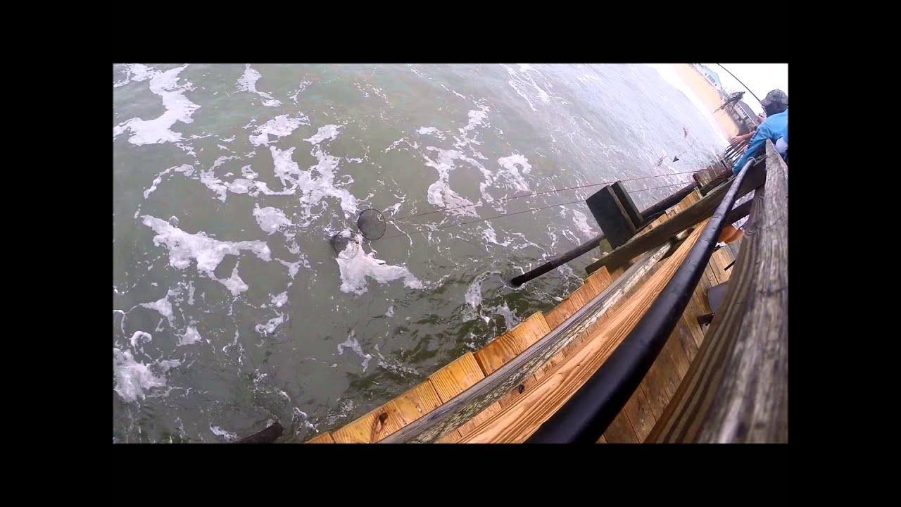 Avon pier drop net on a puppy drum youtube for Pier fishing net