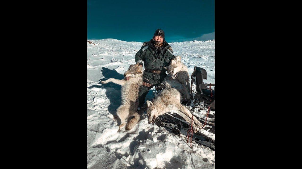 hunting for wolves . Зимняя охота на волков