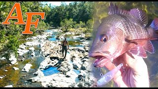 Adventure Jungle Fishing w Mangrove Jack an amazing Explore EP.409