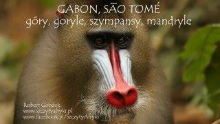 Gabon, Sao Tome - góry, goryle, szympansy, mandryle - pokaz zdjęć Roberta Gondka