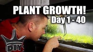 Planting my nano aquarium!!