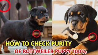 How to Check Pure Rottweiler Breed In Hindi | Know Your Breed In hindi