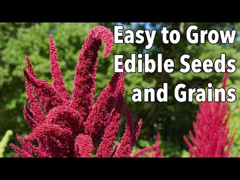 Easy to Grow Edible Seeds and Grains