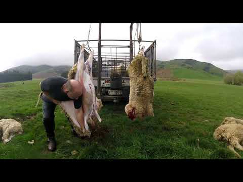 New Zealand homekill