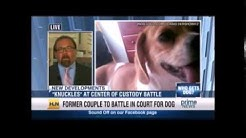 Pet Custody Discussed by Attorney Sharon Liko on HLN Prime News