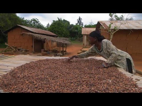 Achieving More Together: Fairtrade Cocoa from the Ivory Coast