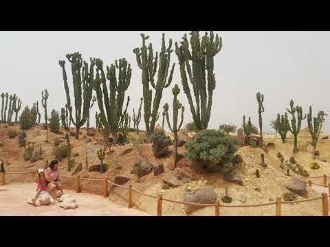 Jardin botanique et jardin des cactus à Crocoparc Agadir...