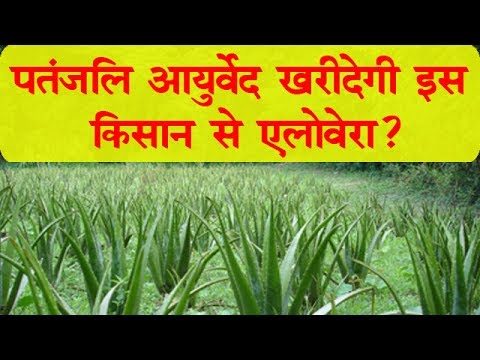 Aloevera Contract Farming With Patanjali - A Story of Farmer