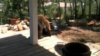 Bear Cub - June 21, 2011 - Colorado Springs
