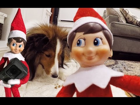 📹 My Elf on the Shelf STOLE the GOPRO and made a VIDEO! 📹 - vlog e246