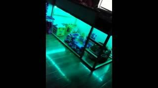 minger led strip light 16 4 ft 300 leds rgb smd 35