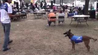 Training To Heel Your Dog In A Crowd