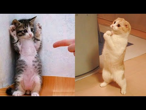 Funniest Animals – Best Of The 2021 Funny Animal Videos #11