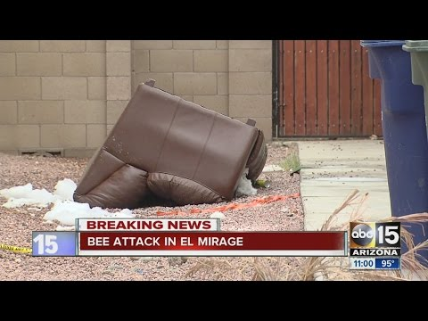 El Mirage Bee Attack