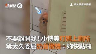 不要離開我!小博美盯媽上廁所 等太久委屈奶音撒嬌|寵物|小粉|塞乃