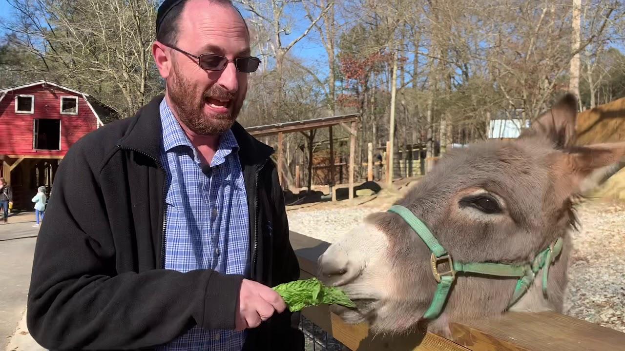 Animal Torah: Donkey Edition