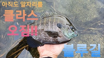 (Ep.32) 강릉 죽헌지 알자리 블루길의 흥미로운 수중영상! 전설의 4짜 블루길을 찾아서!! in Spawning Period, Blue gill Underwater Cam