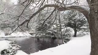 8 hours of Snow Falling on Lake (No Music) Relaxing, Sleeping, Meditation, Studying, Baby to Sleep
