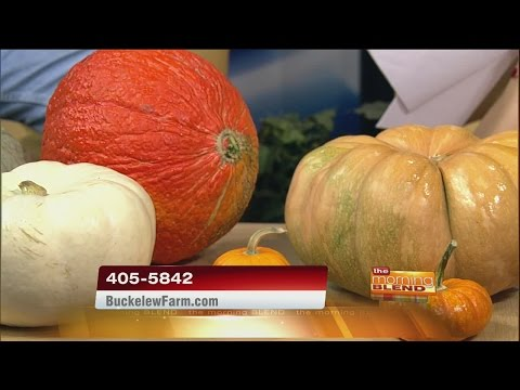 Buckelew Farms - Pumpkin Festival and Corn Maze