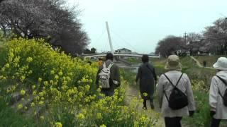 JR東海さわやかウォーキング 牛久保駅 2011/04/03