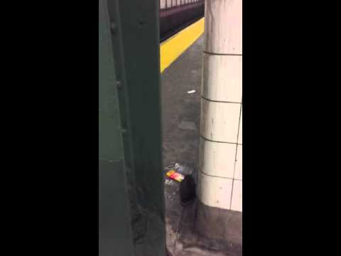 Mta worker destroys NYC subway rat