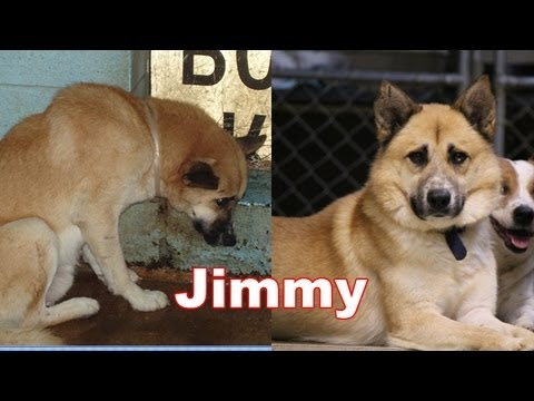 Amazing Transformation Of A Shelter Pet The Story Of Jimmy - 27 amazing transformations of dogs and cats before after adoption