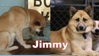Amazing Transformation of a Shelter Pet  - The Story of Jimmy. Adopt Rescue Foster thumbnail