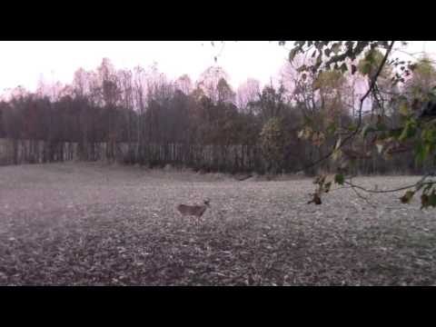 2015 Whitetail hunting in Henderson ky