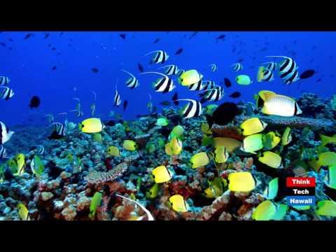 Climate Action for Marine Monuments -Dan Polhemus, PhD (USFWS) & Keola Lindsey (OHA)