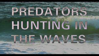 Predators Hunting in the waves