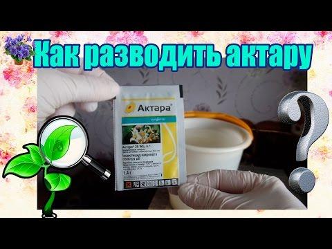 Как разводить актару для полива и опрыскивания комнатных растений