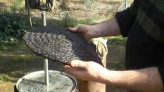 producir aceite paso a paso thumbnail