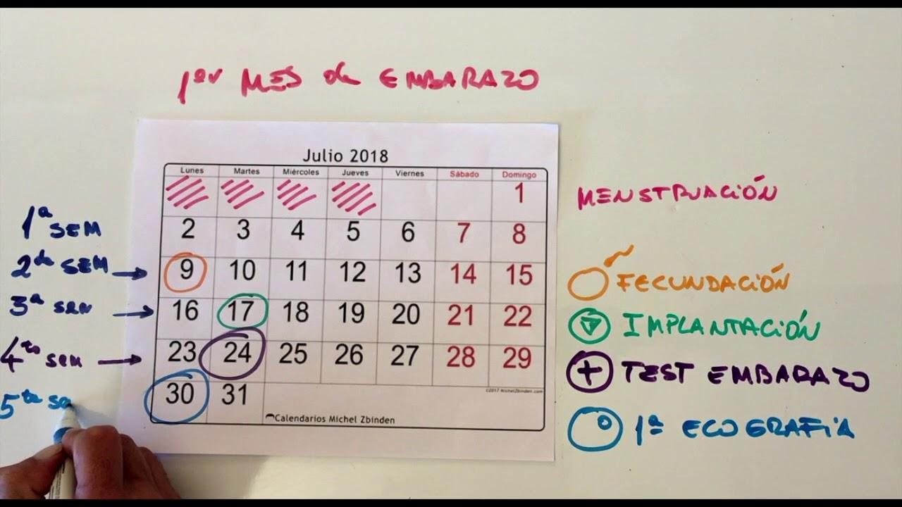 Calendario Michel Zbinden.Mi Primera Eco Del Embarazo