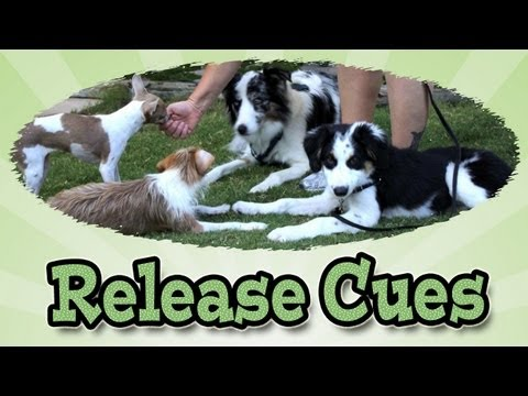 release-cues:-dog-training