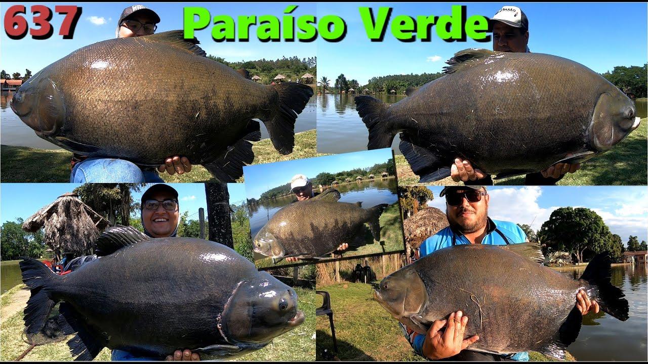 Em busca dos Tambas GIGANTES do Paraíso Verde no couro e no robô - Programa Fishingtur na TV 637