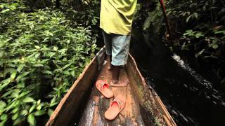 The Congo River - Artery of the Forest
