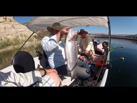 Big Triploid At Upper Net Pens Rufus Woods Lake In WA