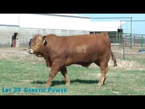 Lot 39  Genetic Power