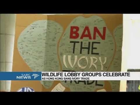 Wildlife lobby groups celebrate as Hong Kong bans ivory trade