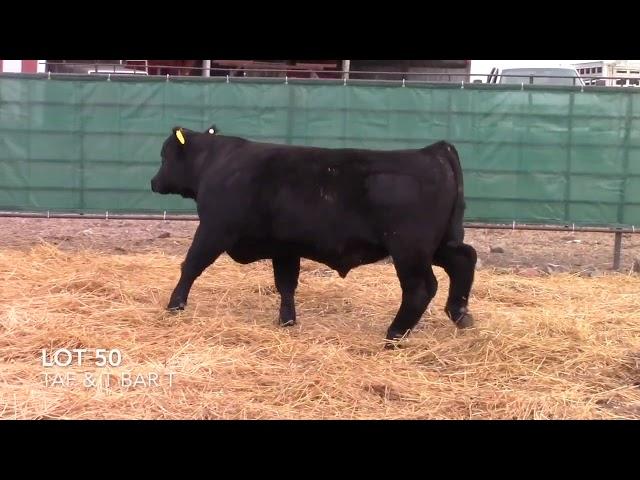 Taliaferro Angus \u0026 T Bar T Angus Ranch - 50