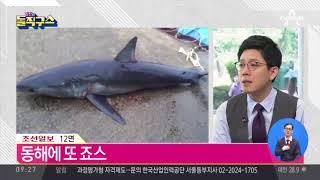 경주 인근 바다에서 '식인상어' 백상아리 발견