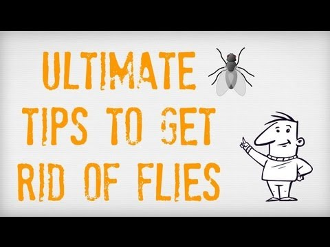 ultimate tips on how to get rid of flies getting rid of. Black Bedroom Furniture Sets. Home Design Ideas