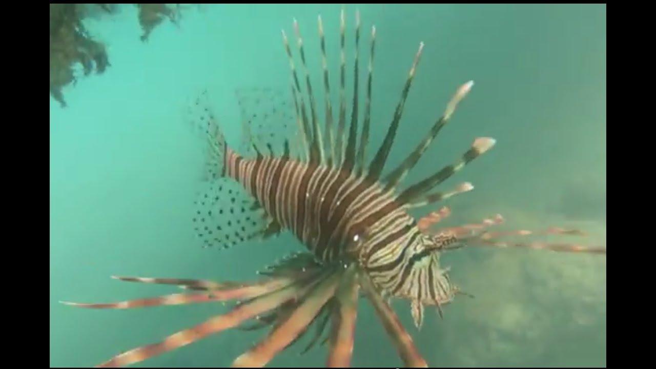 фото рыба зебра