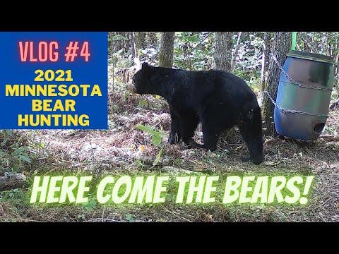 Minnesota Bear hunting VLOG 4 | Here come the bears!