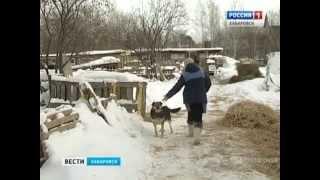 Вести-Хабаровск. Дачница и 57 бродячих собак(, 2014-12-23T00:17:39.000Z)