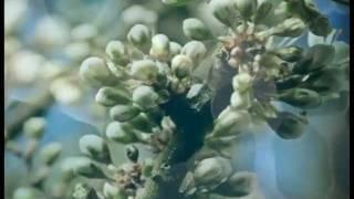 Песня Света (music by Sri Chinmoy)
