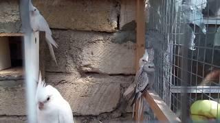 попугаи и витамины