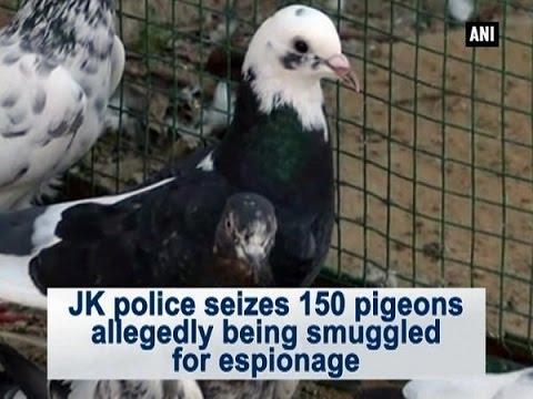 JK police seizes 150 pigeons allegedly being smuggled for espionage - ANI News