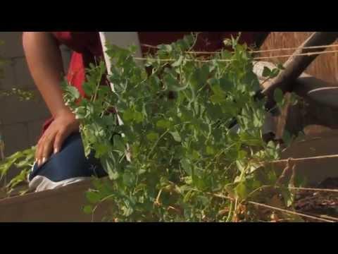 Los Angeles Backyard Organic Vegetable Garden 2014 Tour