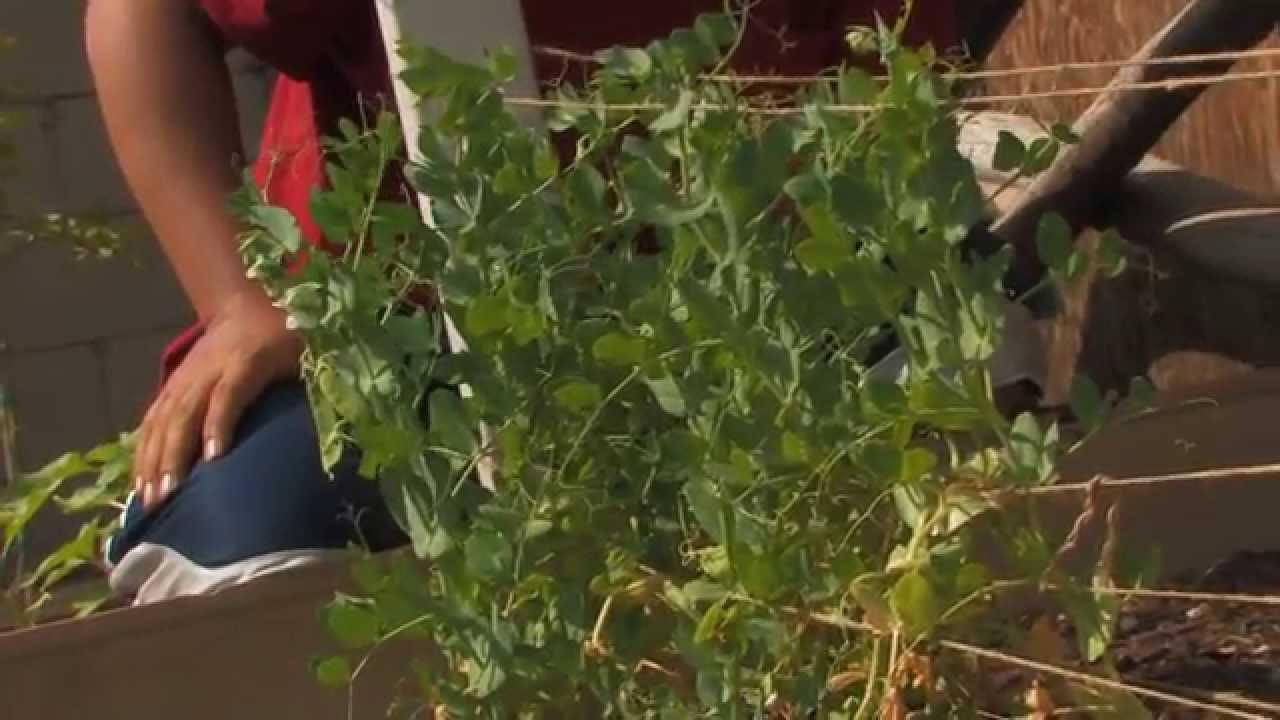 los angeles backyard organic vegetable garden 2014 tour youtube